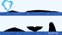 Gray Whale Surface Characteristics
